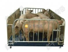 可移动带围栏牲畜秤
